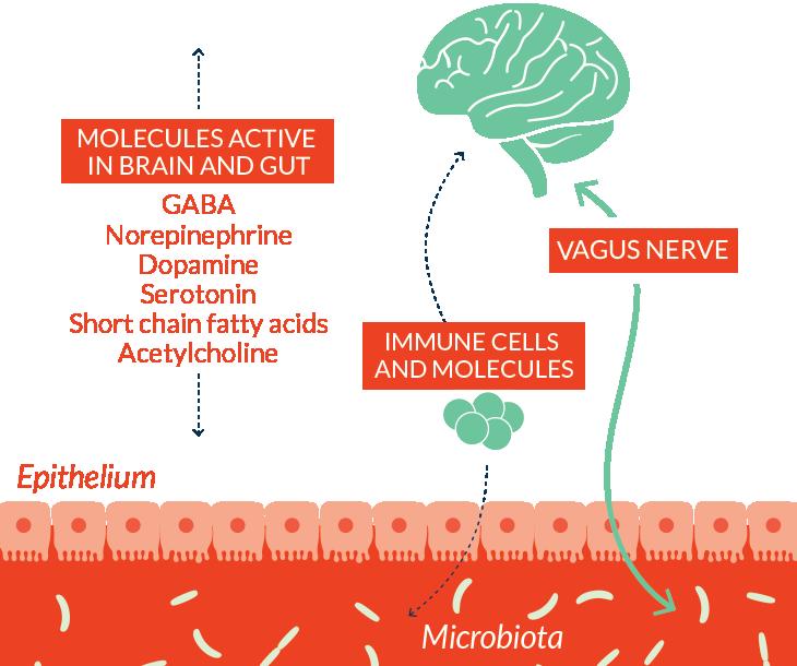 microbiota-gut-brain-connection